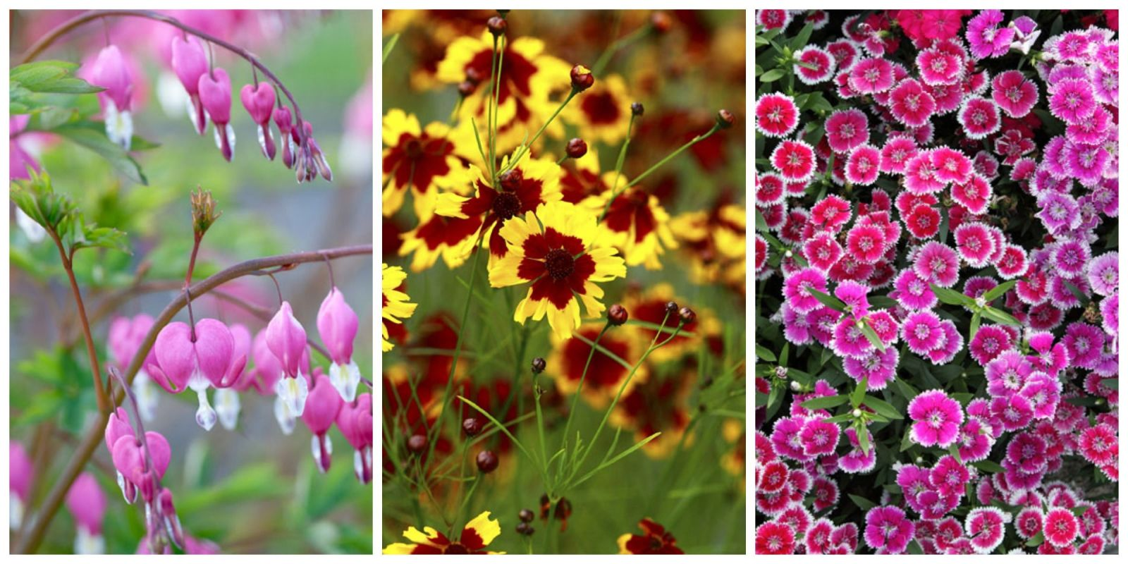 Best perennial flowers ideas for easy perennial for Perennial garden pictures