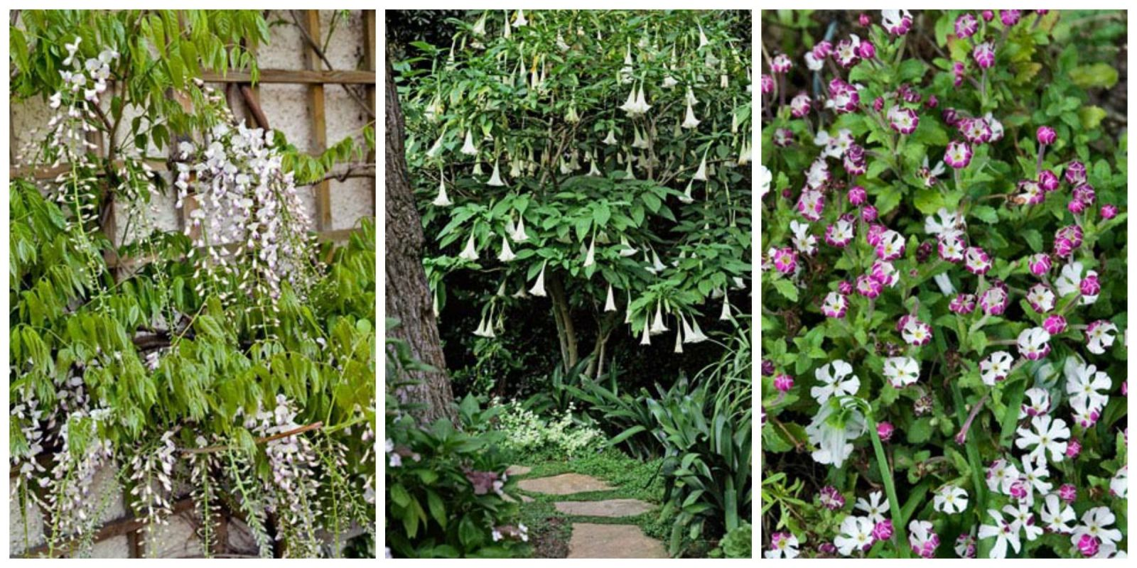 9 Fragrant Night Bloom Flowers Best Flowers That Only