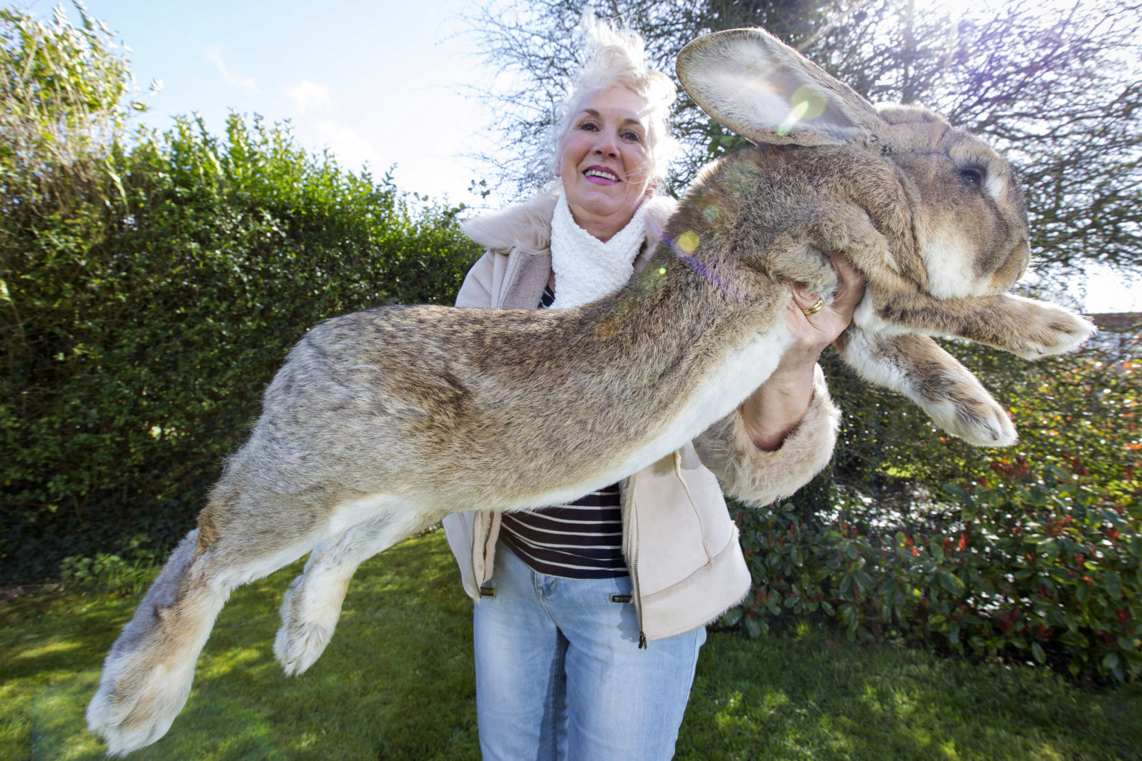 The World's Largest Rabbit Is Facing Competition From His ...