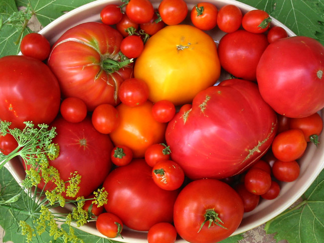 How to grow tomatoes in containers best tips for growing for Ideas for tomatoes from the garden