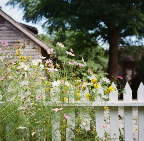 Keep things from feeling too messy and chaotic by lining the perimeter of your garden with a classic white-picket fence. Plus, there's nothing more beautiful than bright flowers peeking out from in between the crisp white fence slats.<br />