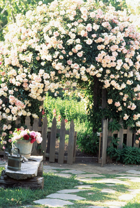 The addition of an arbor will instantly transform your garden into a romantic escape, not to mention its a beautiful place to showcase climbing flowers and vines.<br />