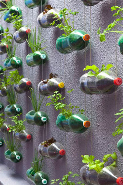 One person's trash is another person's vertical garden—here, empty plastic soda bottles are packed with soil and hung from a clothesline.&lt;br /&gt;&lt;br /&gt;<br /> Get the tutorial at The Dirt.&lt;br /&gt;&lt;br /&gt;<br />
