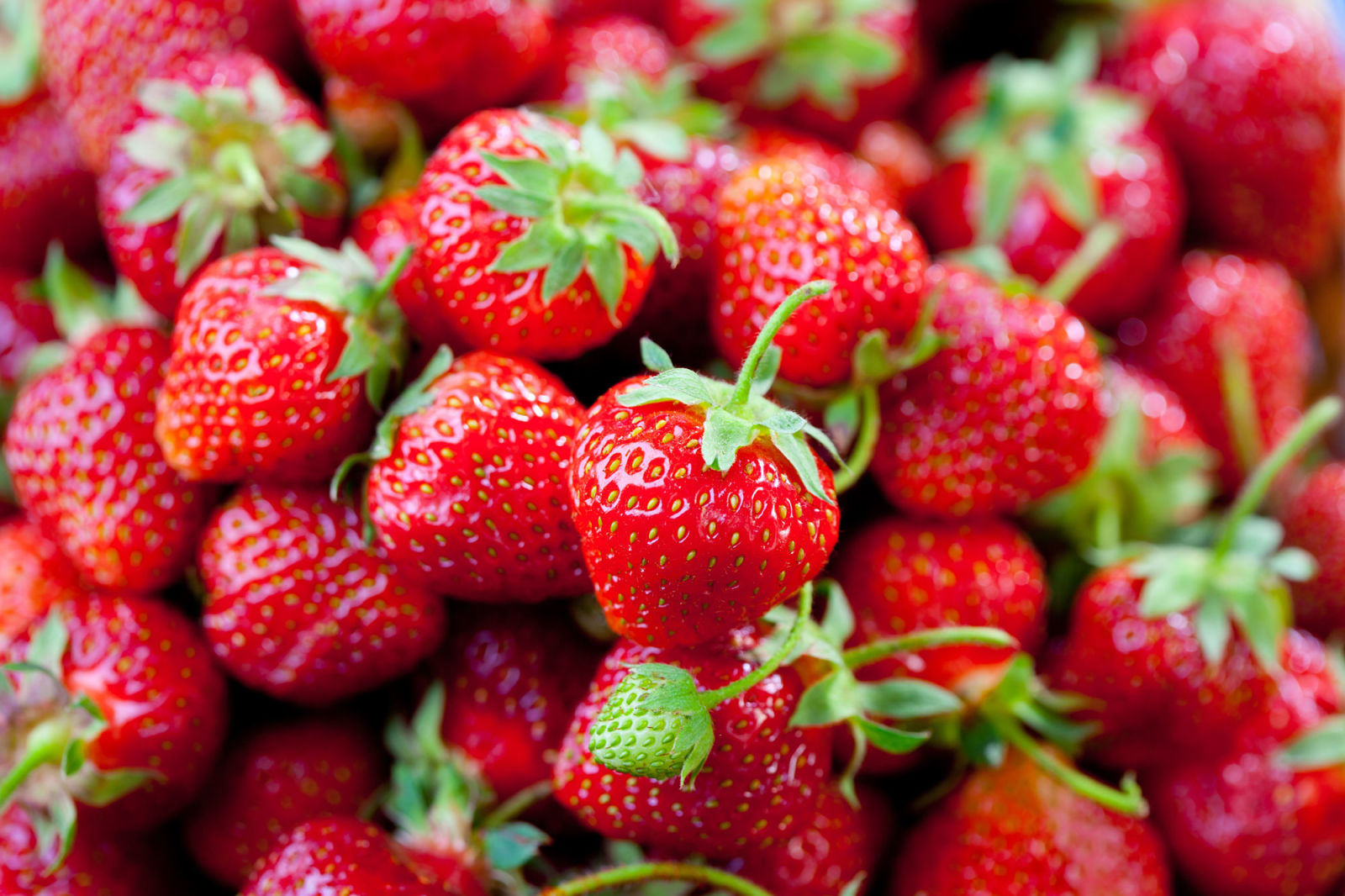 Strawberry Facts Fun Facts About Strawberries
