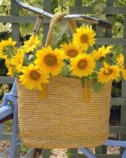 """Legend has it that when Spanish explorers reached the Americas, they thought sunflowers were made of real gold. Of course, they were wrong, hence the meaning """"false riches."""""""