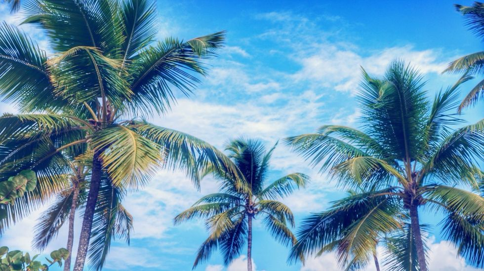 """Whether potted or part of a tropical landscape, these trees always said """"vacation"""" to us. But they actually represent peace, as the trunk bends without breaking (flexibility, you see).; width="""