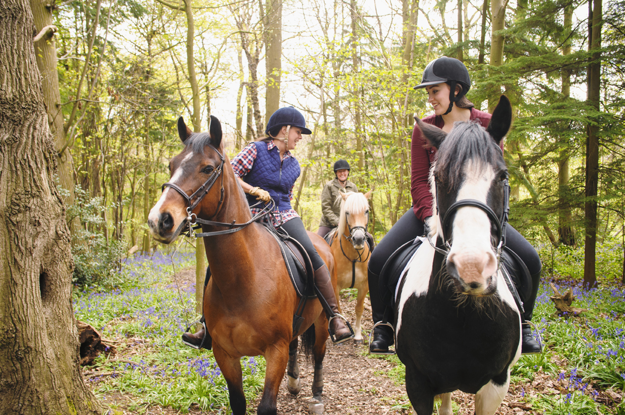 how to go horseback riding One of the most intense sports known to man not only because it's physically challenging, but it takes more than athleticism horseback riding takes commitment, time, patience, and most importantly building a bond with your horse.