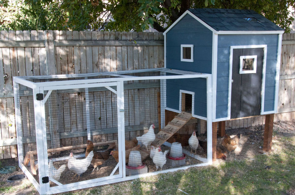 shades of blue - Chicken Coop Design Ideas