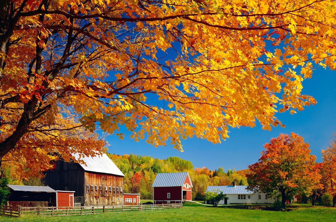 New Leaf Farm Tour