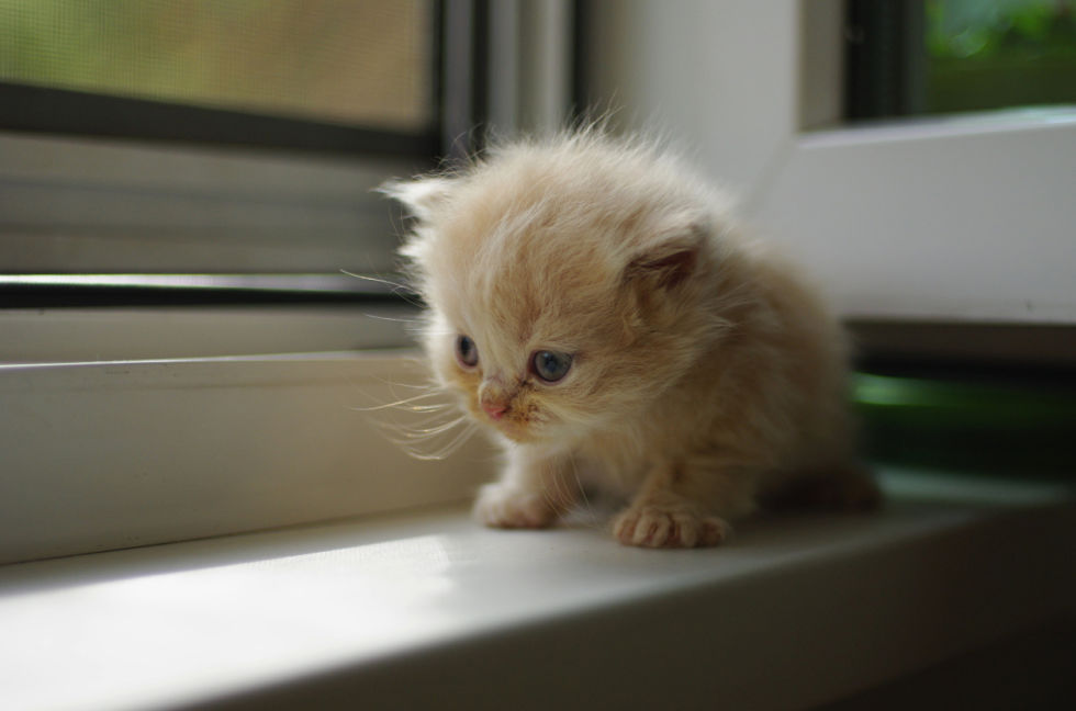 Cats That Stay Small Tiny Kittens For Your Tiny Home - 28 adorable cat mums proud of their tiny kittens