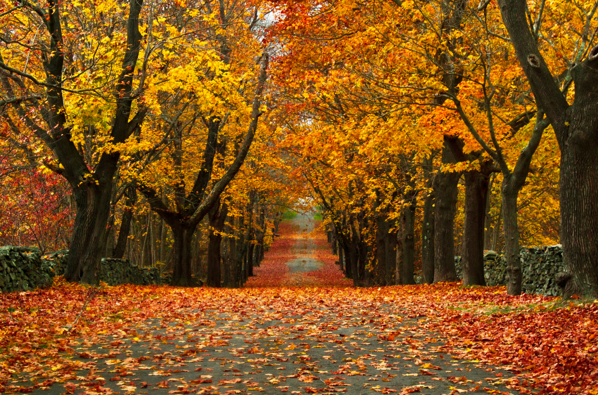 Beautiful Fall Leaf Images Galleries