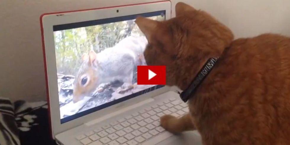 Кот и часы видео