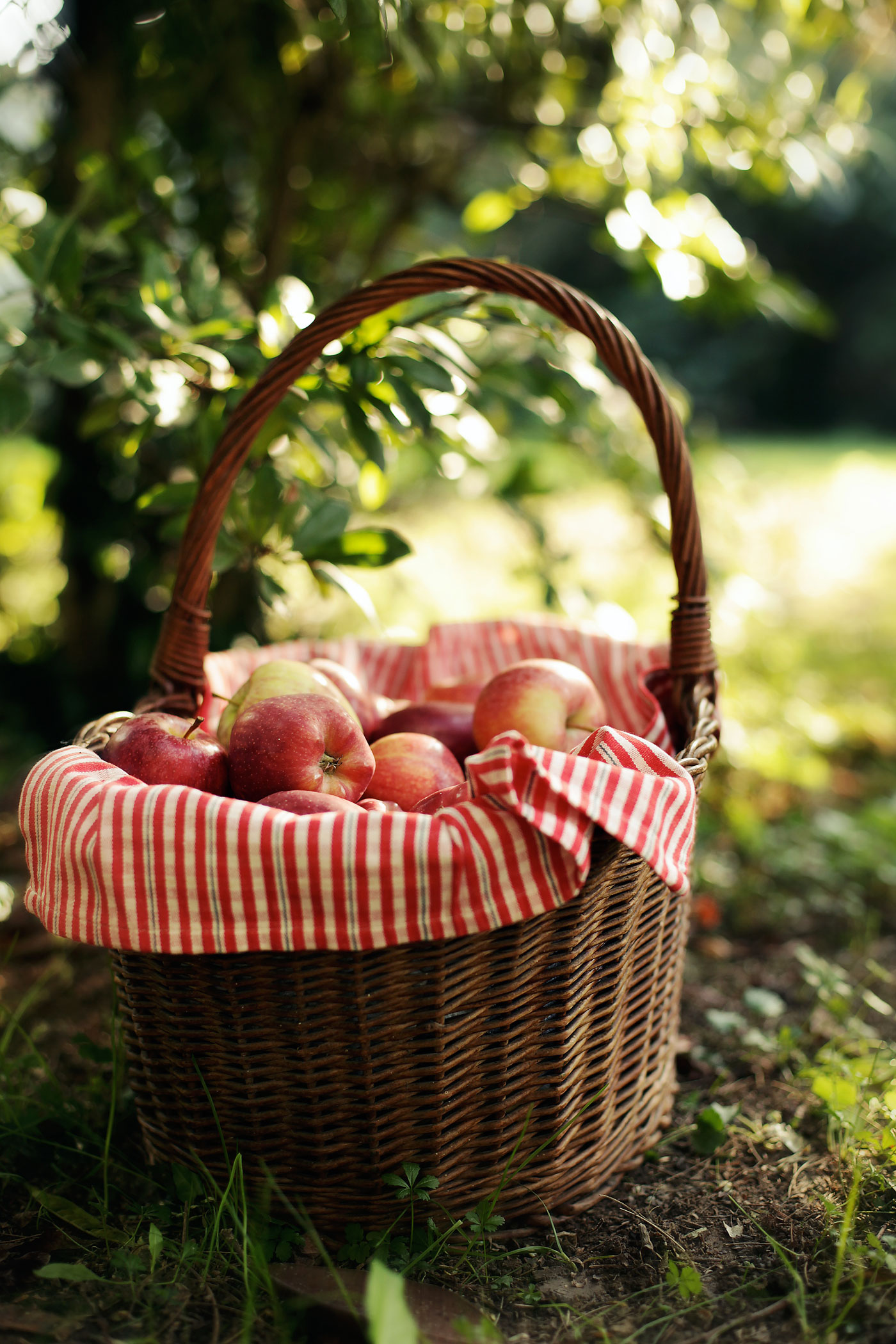 Best Apple Picking Places Near Me