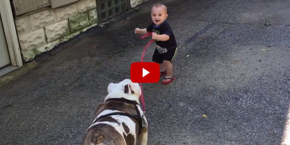 how to train a stubborn bulldog