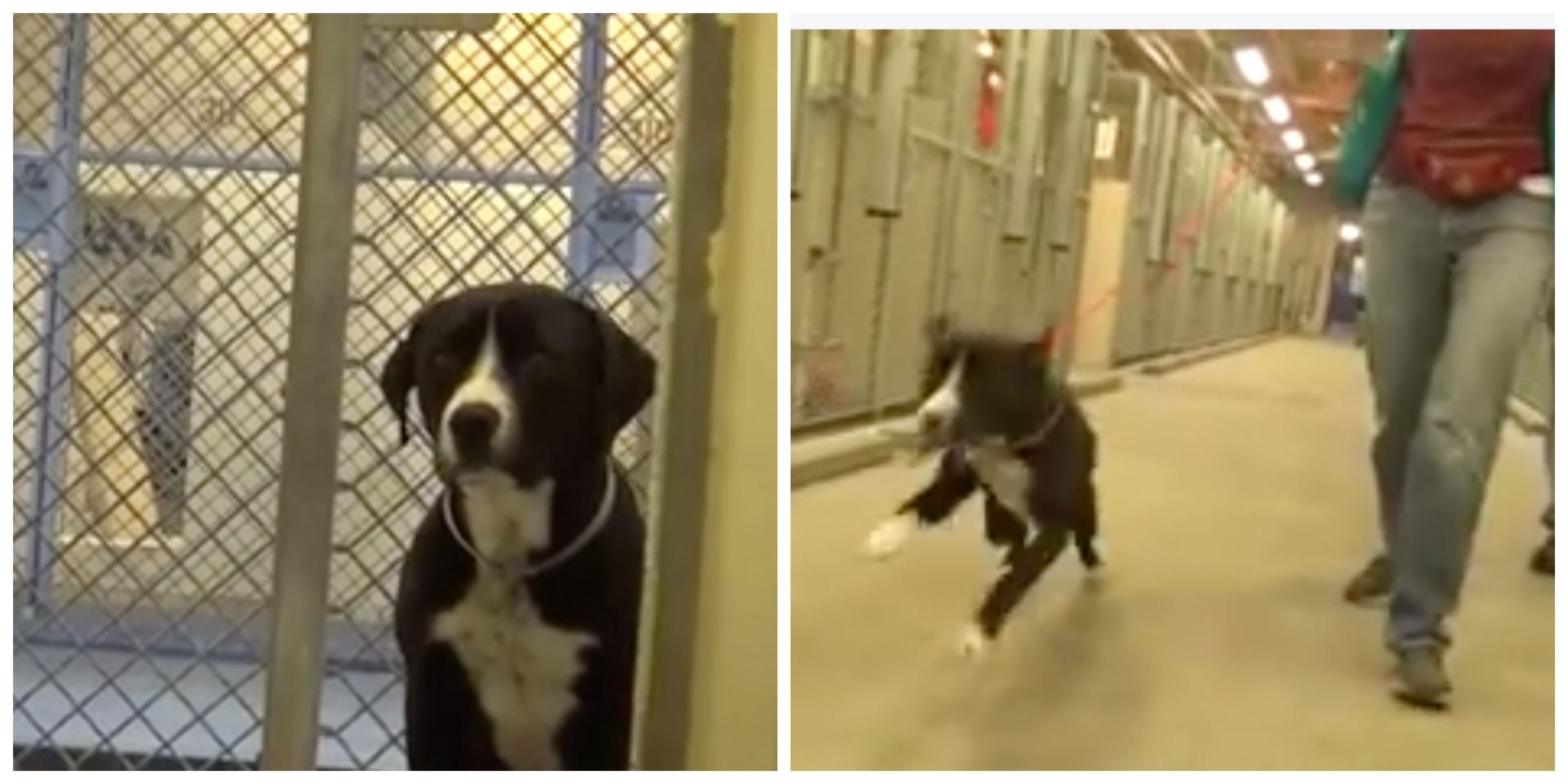 Dog S Happy Reaction To Being Rescue Freedom Walk Out Of