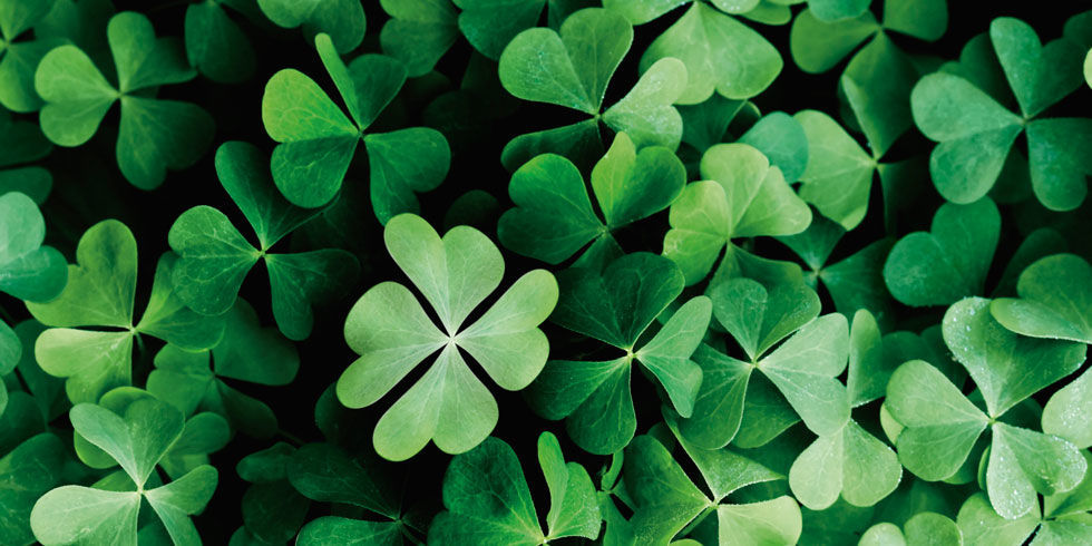 tips to finding a 4 leaf clover Forget four-leaf clovers successful entrepreneurs make their here's a few ways to prepare yourself so you're lucky the next time opportunity knocks: always have your phone or a if there's one good piece of advice i give every entrepreneur, it's to always make the ask never assume you're out of the.
