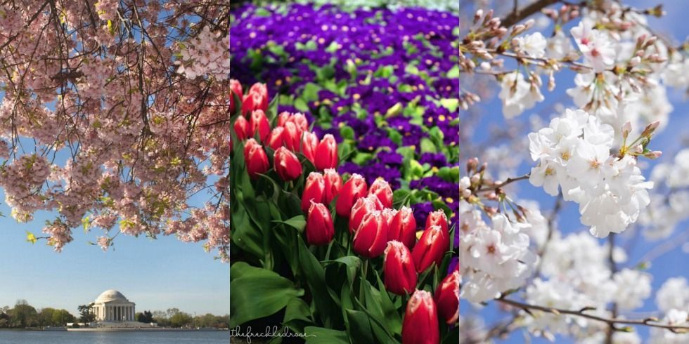 the best flower festivals to see this spring  flower festivals, Beautiful flower