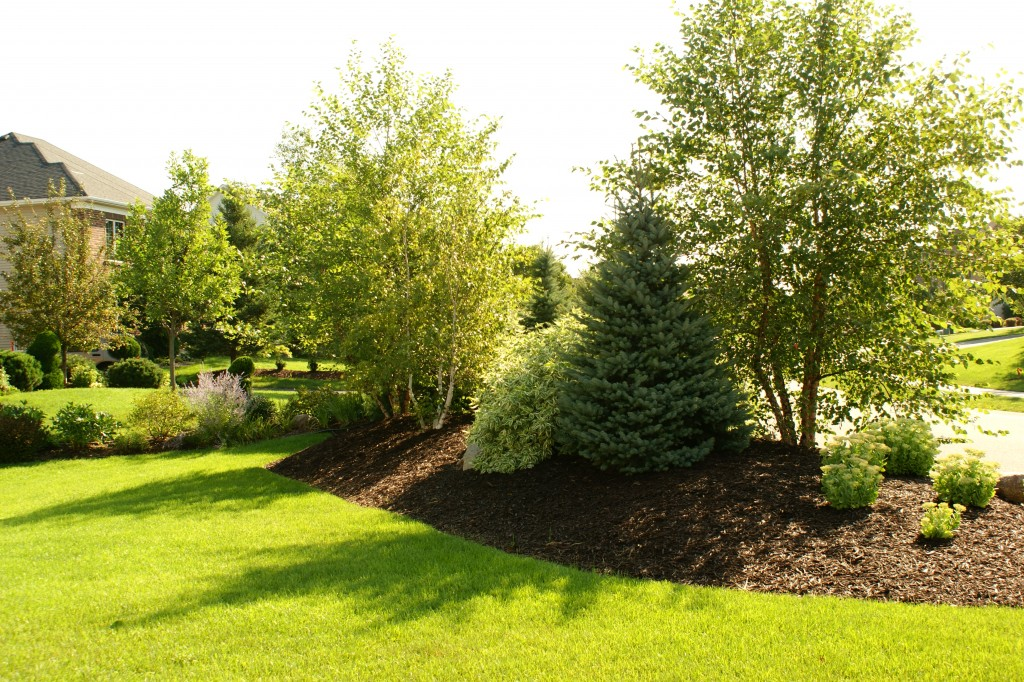 12 Cheap Landscaping IdeasBudgetFriendly Landscape Tips for