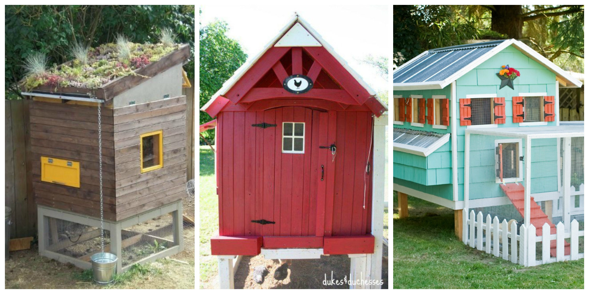 22 diy chicken coops you need in your backyard diy