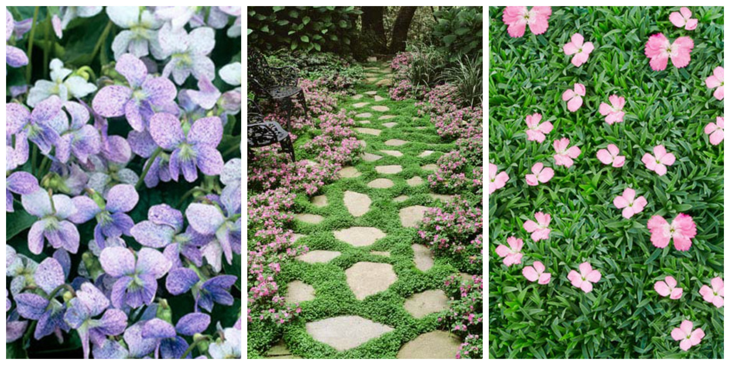 11 Best Ground Cover Flowers Plants Low Growing