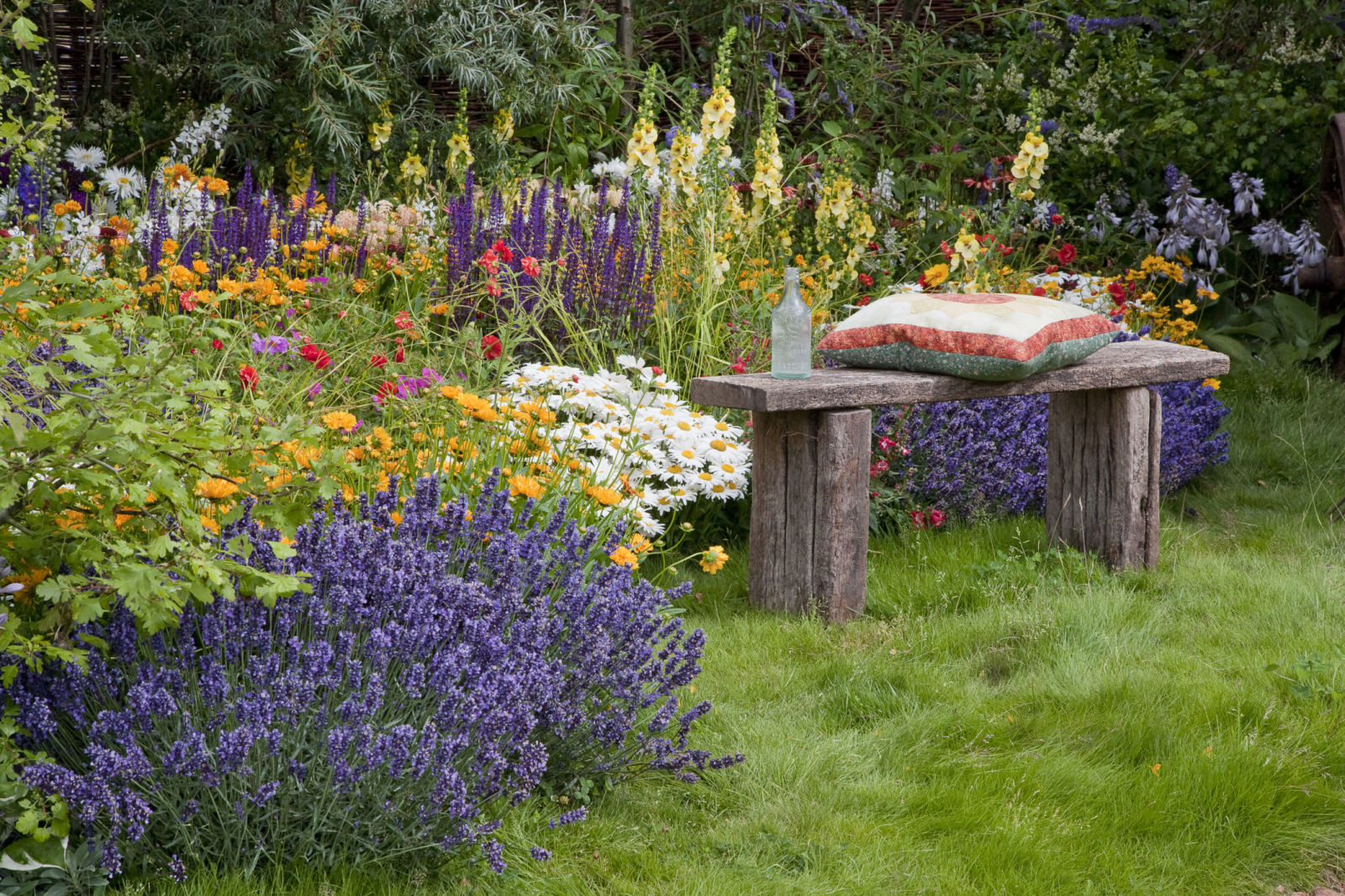 10 plants that repel mosquitoes natural mosquito repellent plants