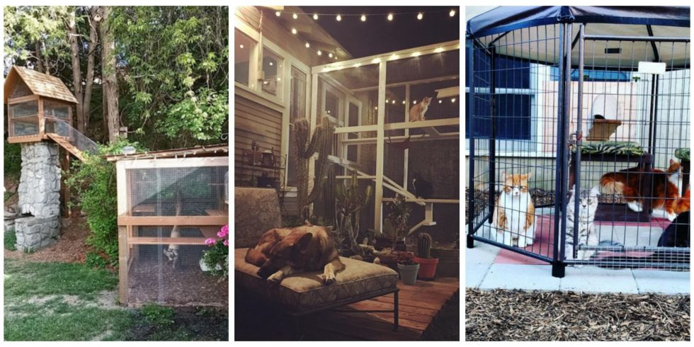 Amazing Catios You Have To See Catio Ideas Diys And Window