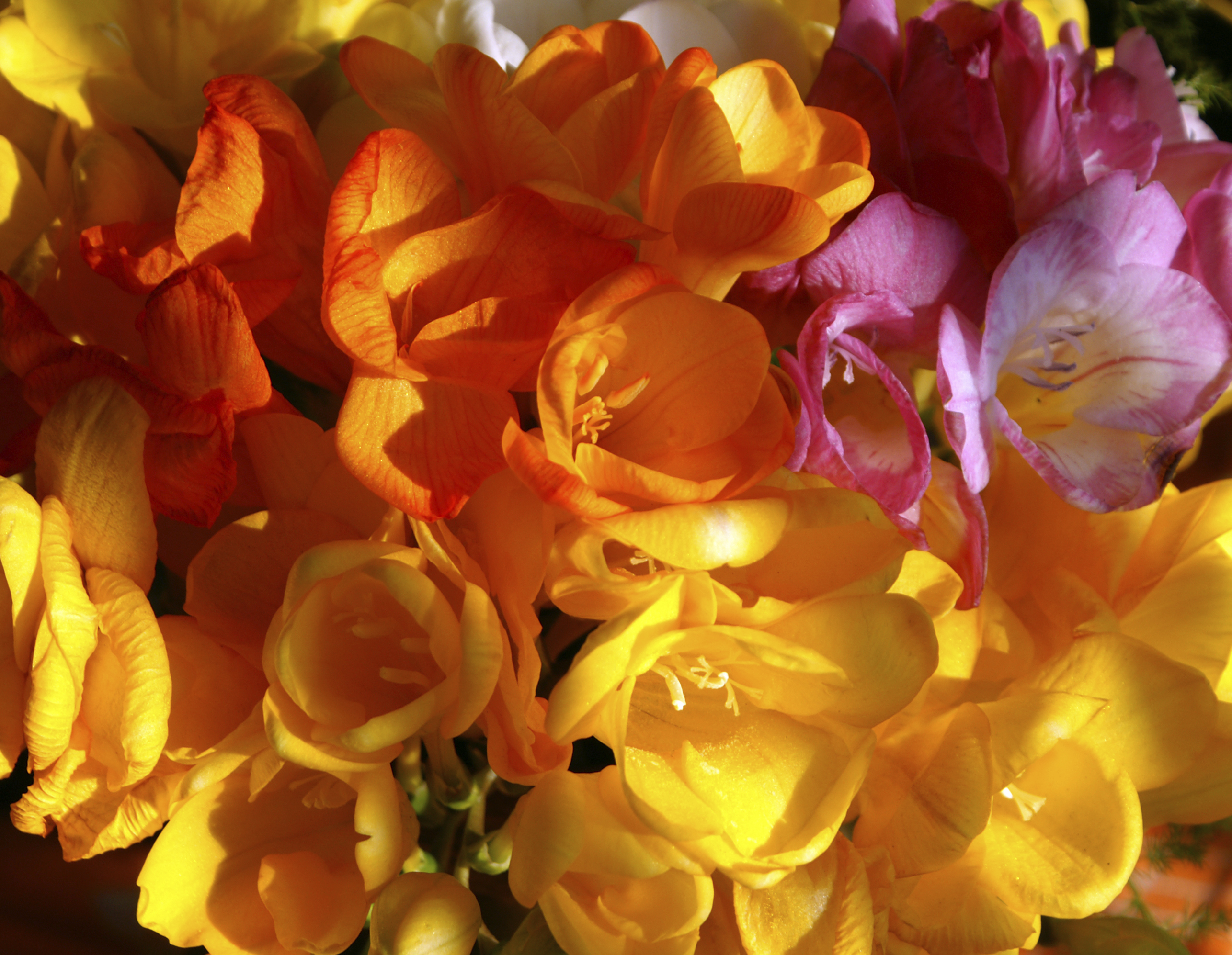50 Best Types of Flowers Pretty Pictures of Garden Flowers