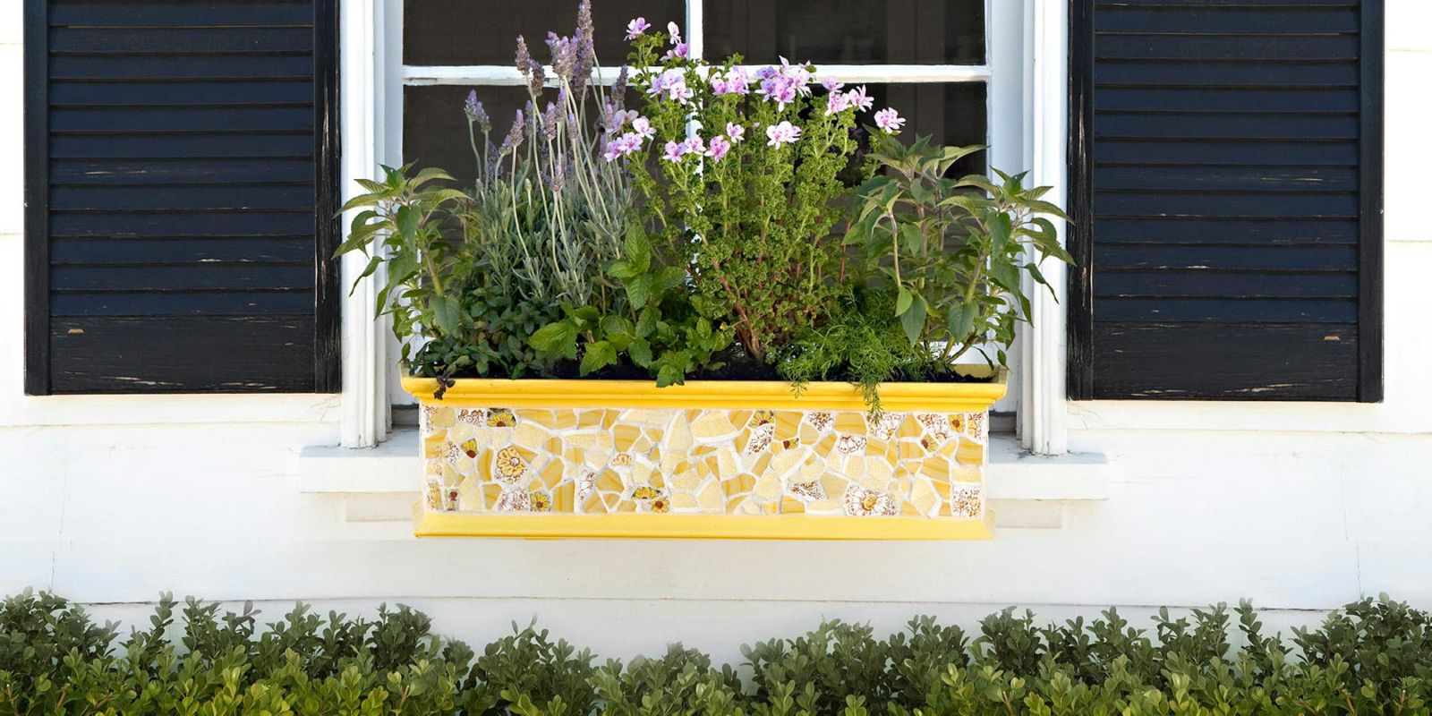 18 Fun Gardening Ideas For Your Window Boxes   Window Box Flowers, Tips,  And Ideas