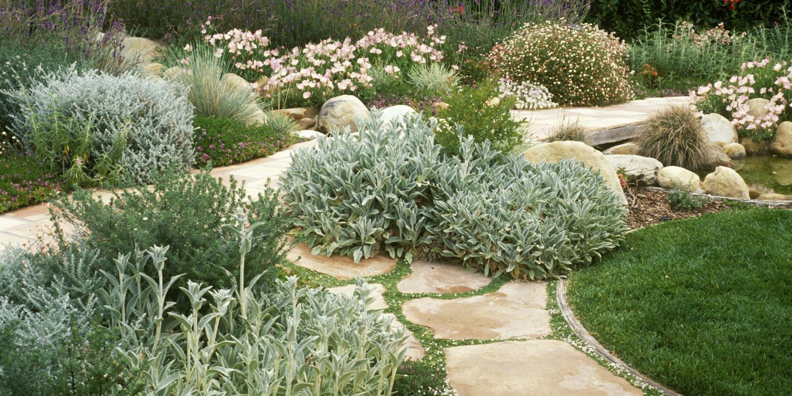 Water saving landscaping saving water in the garden for Water saving garden designs