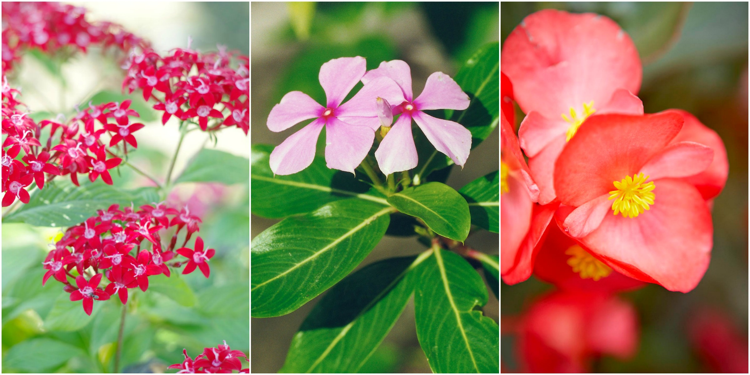10 heat tolerant plants that will survive and thrive this brutal summer - Heat tolerant plants keeping gardens alive ...