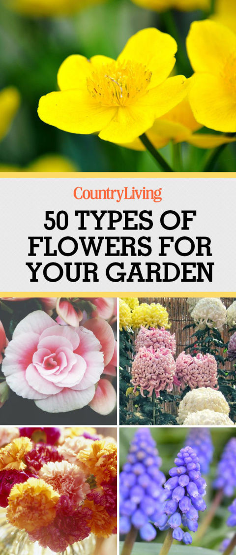 50 Best Types of Flowers – Pretty Pictures of Garden Flowers