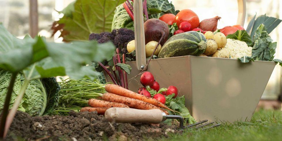 Fall Vegetable Garden Fall Gardening Tips