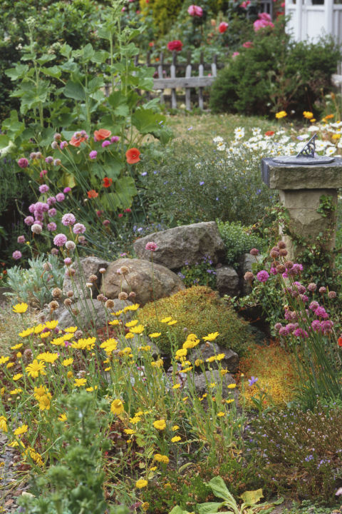 The Best Plants For Rock Gardens Tend To Be On The Small Side, Often Alpine  In Origin And Drought Tolerant. They All Need Good Drainage U2013 Especially If  You ...