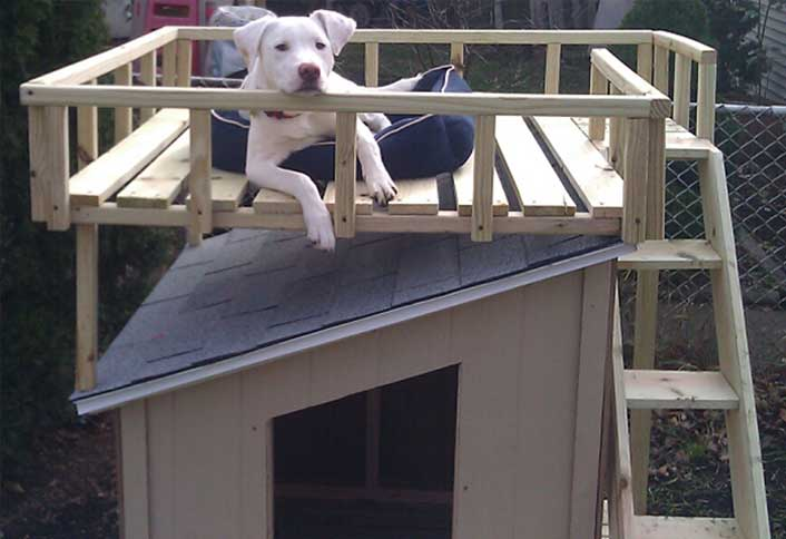 Lovely Dog House With Roof Deck