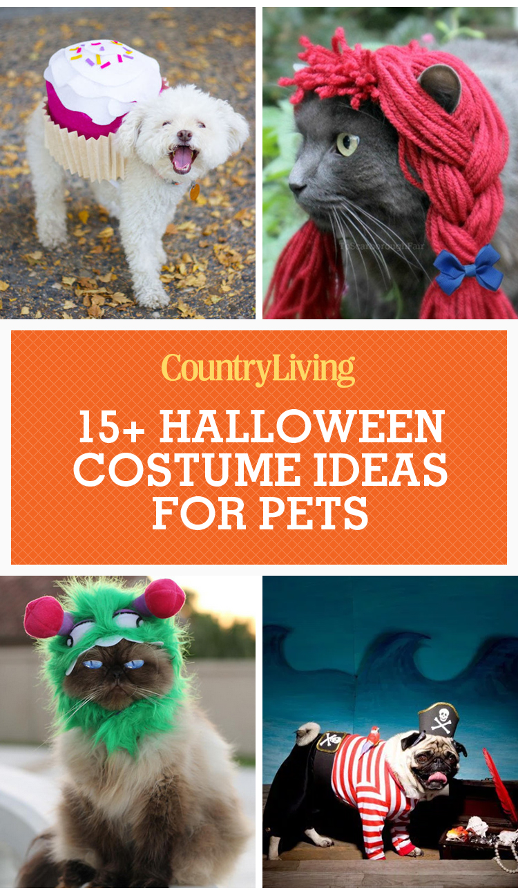 25 Cute Dog And Cat Halloween Costumes Best Ideas For