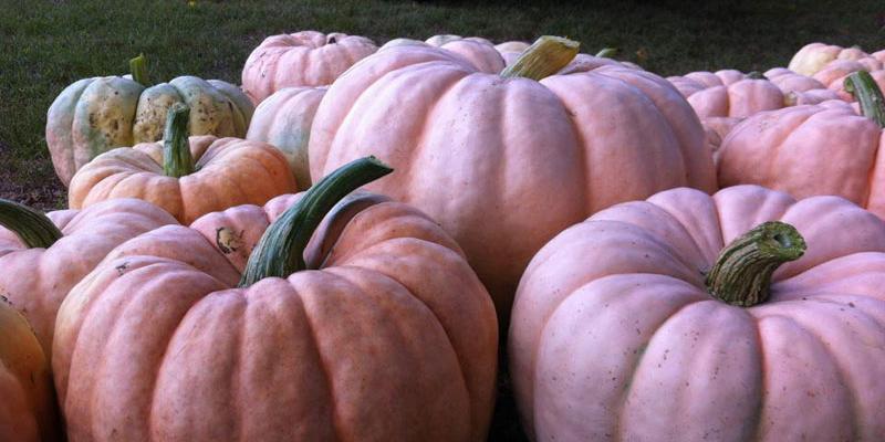 pumpkin decorating tips