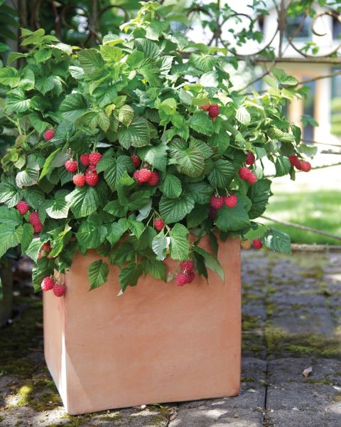 Gardening Trends That Are Going To Be Huge In New Garden