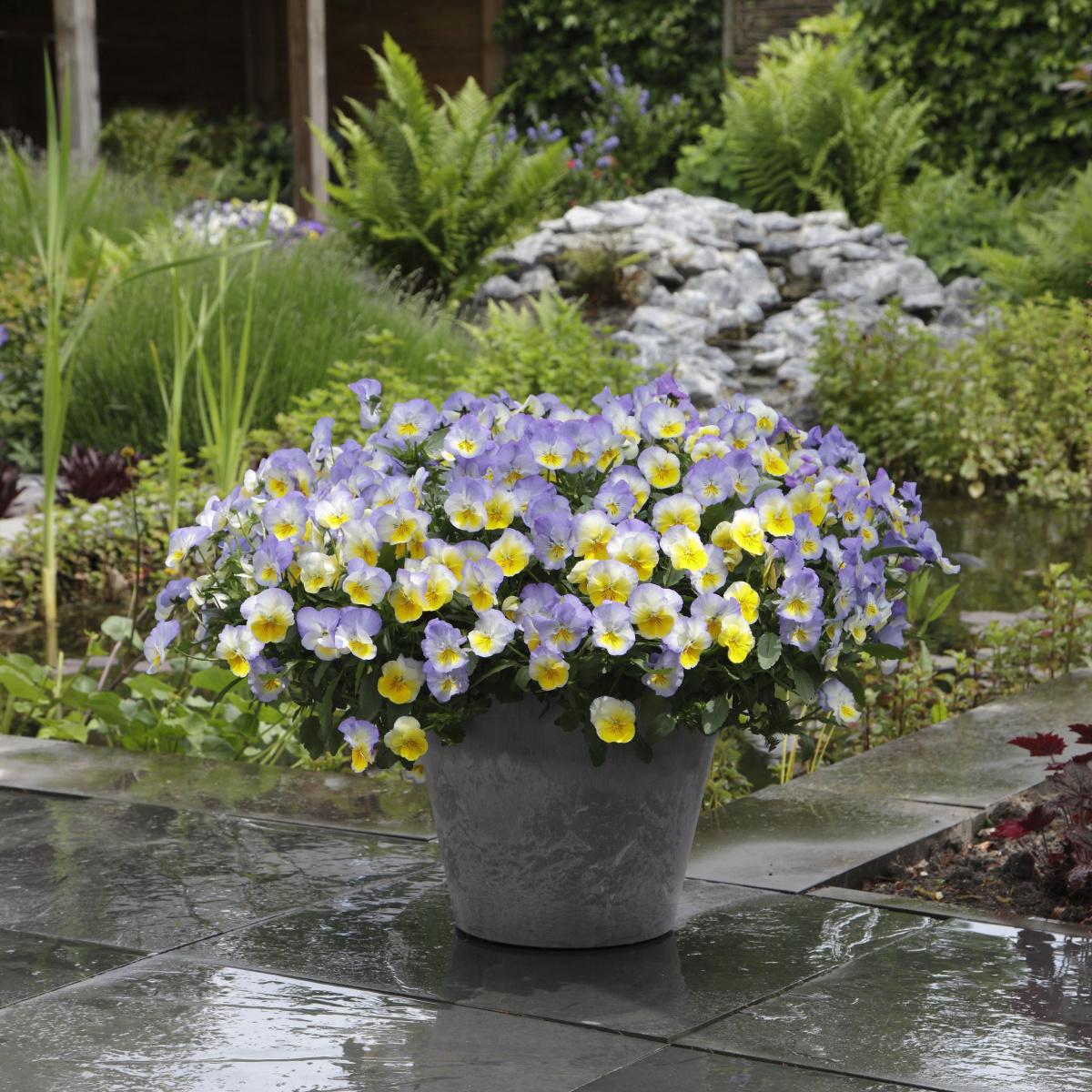 10 Container Gardening Ideas