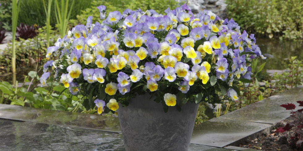 these gorgeous plants shine all season long in containers
