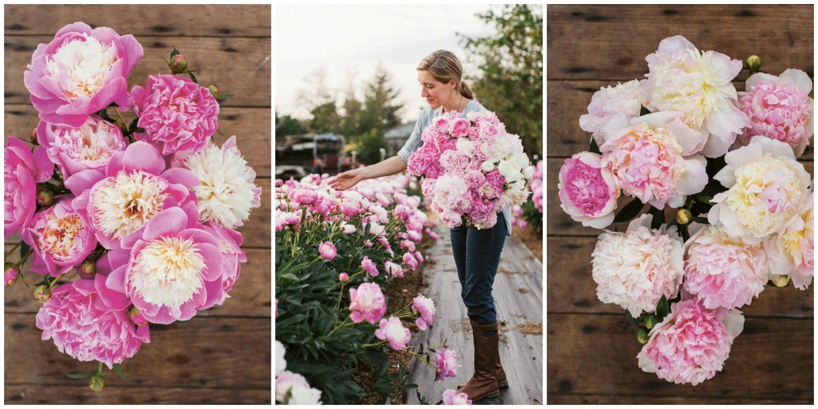 why peonies are the ultimate queen of spring flower cut flower grow excerpt from erin benzakein - How To Cut Peonies