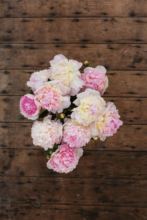 how to grow peonies from cut flowers