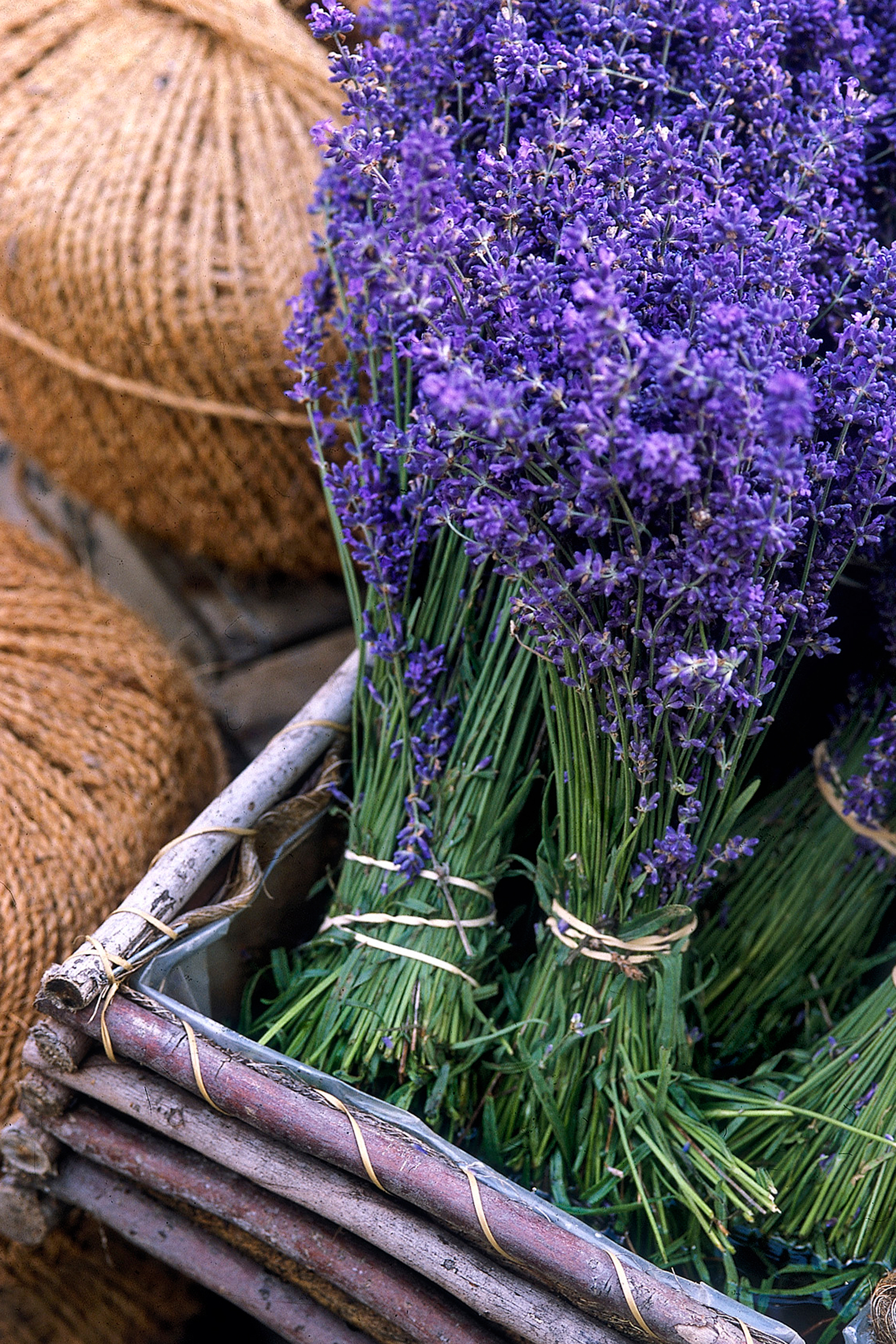 30 Great Lavender Plant Recipes and Uses How to Grow Lavender