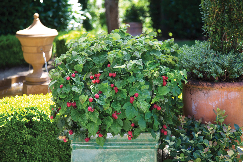 how to create an edible garden edible landscape ideas