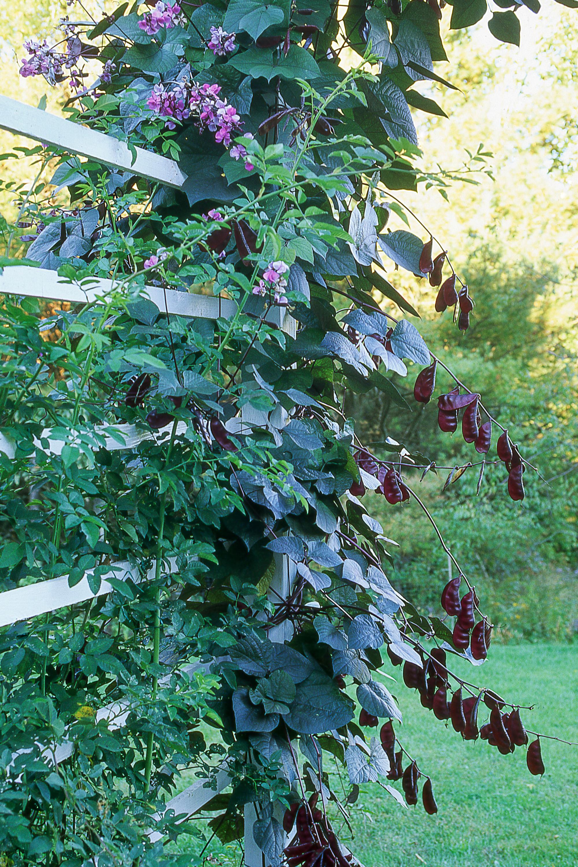 100 Climbing Plants With Flowers Garden Design Garden