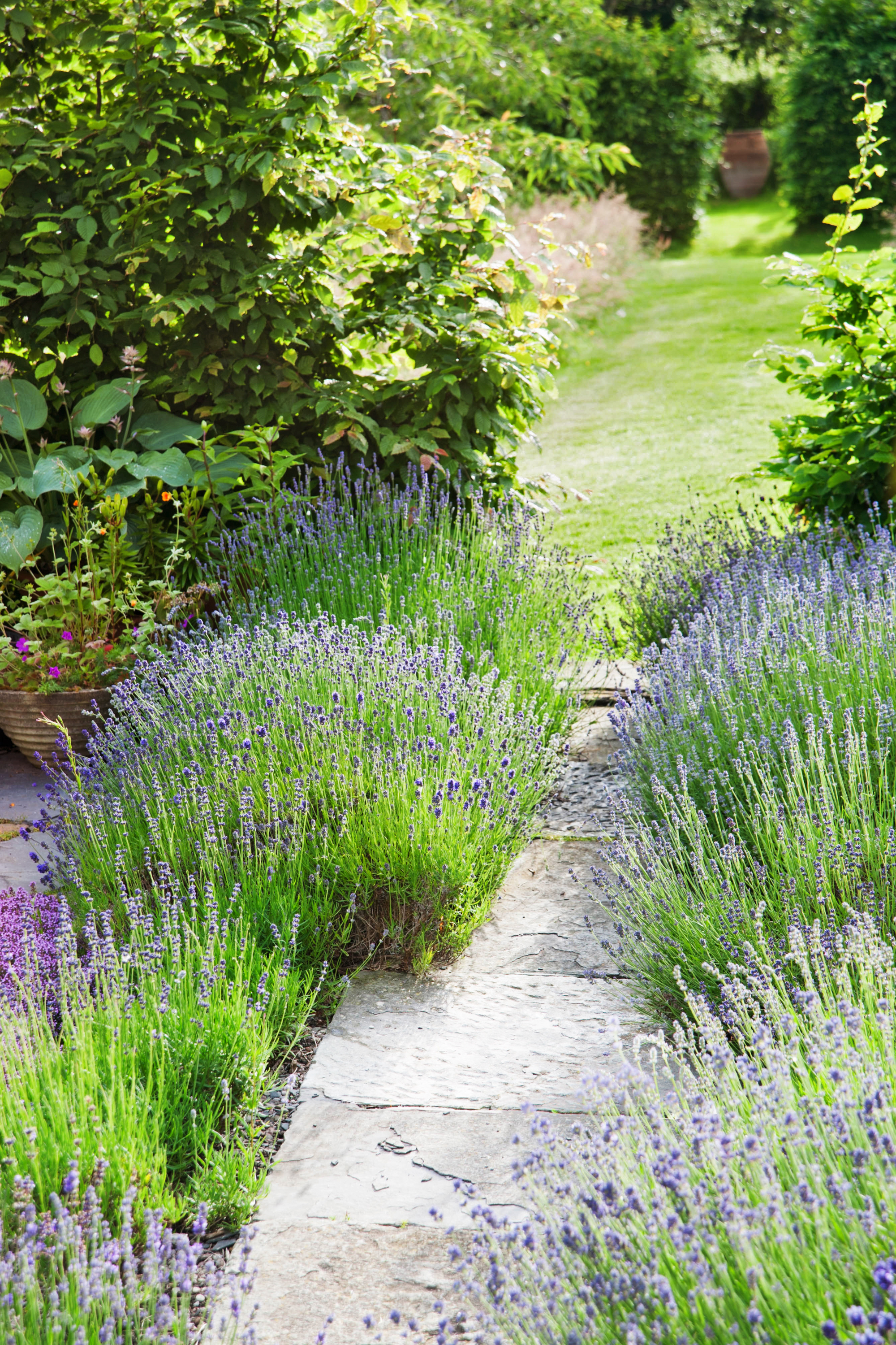 51 Front Yard And Backyard Landscaping Ideas