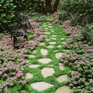Here's how to create a lovely woodland effect in your yard.
