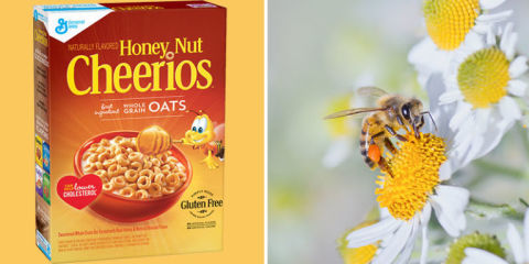 honey nut cheerios wildflower seeds