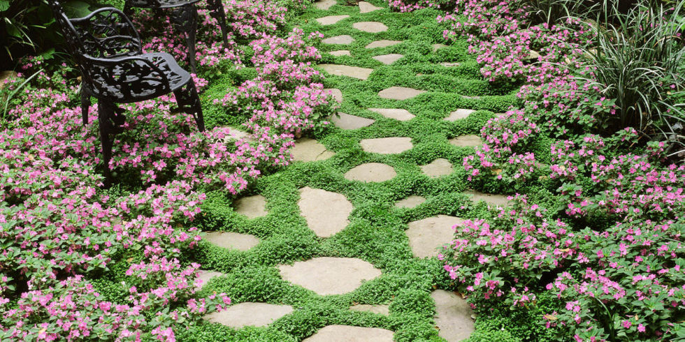 11 Best Ground Cover Flowers Plants Low Growing Perennial Flowers