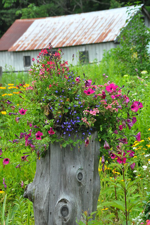 if youve got an old tree stump in your backyard rejoicethey make the most beautiful planters - Garden Ideas Backyard