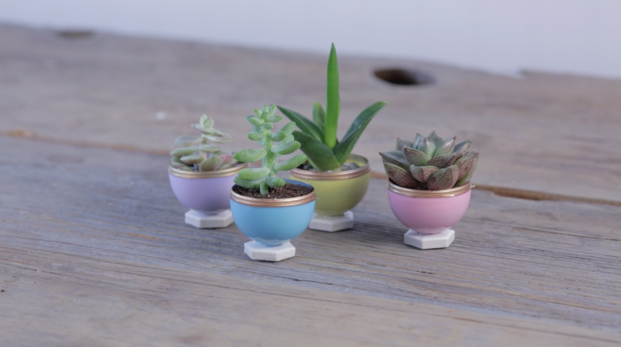 Plant These Bunny Succulents For The Cutest Easter Ever - Japan is going mad over these tiny succulents that look like bunny ears